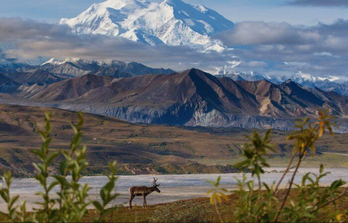 Alaska Cruise Military and Veteran Discount Alaska Cruise Tour Dealsto Denali