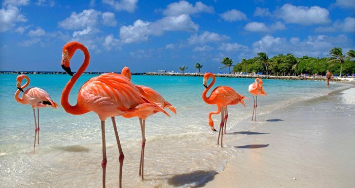 Flamingos Aruba Caribbean cruise deals with a military and Veteran discount