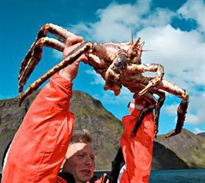 Honningsvag King Crab Military and Veteran Discounts on all Northern Europe Cruises